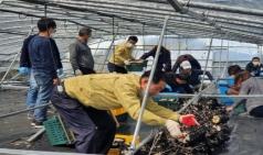 성주군 산림과, 냉해피해 농가 일손돕기
