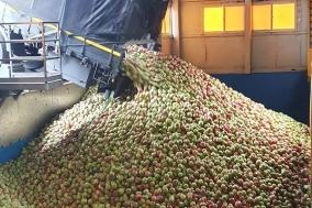 경북도, 태풍 피해 사과․배․포도 긴급수매