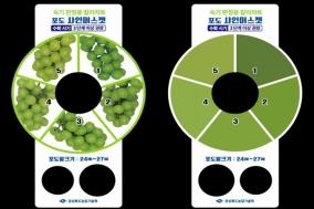 경북도, 샤인머스켓 칼라차트 개발로 수출 경쟁력 높인다!