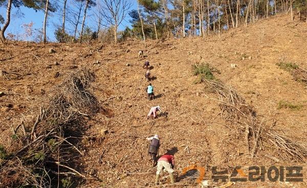 산림과 기획보도-사진자료(1).jpg