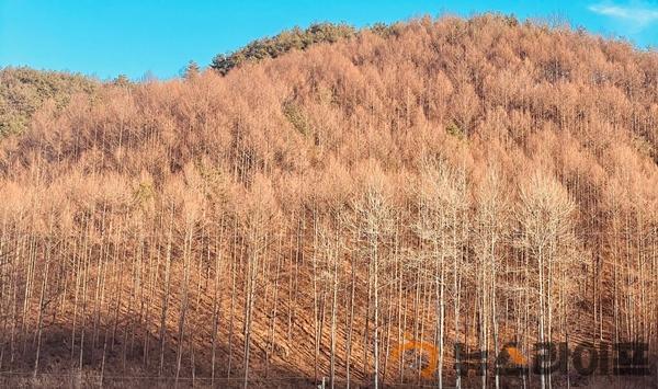 산림과 기획보도-사진자료(9).jpg