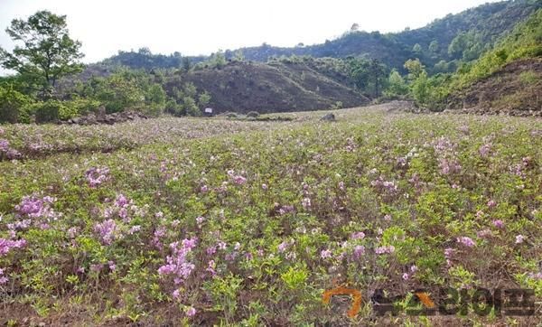 산림과 기획보도-사진자료(2).jpg