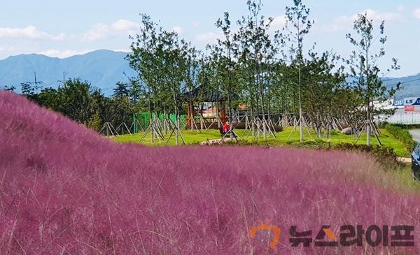 산림과 기획보도-사진자료(7).jpg